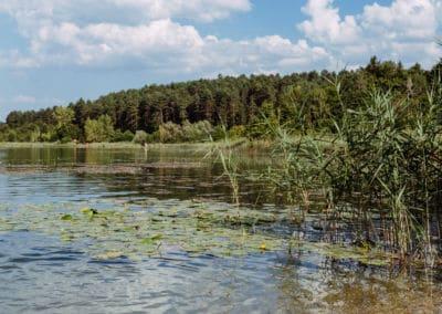 ruhiger-strand-von-natur-umgeben-turnersee-region-klopeiner-see-südkärnten